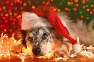 Your Christmas Electrical Safety Checklist